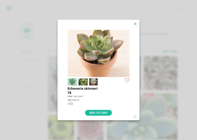 Web Gallery by Succulents
